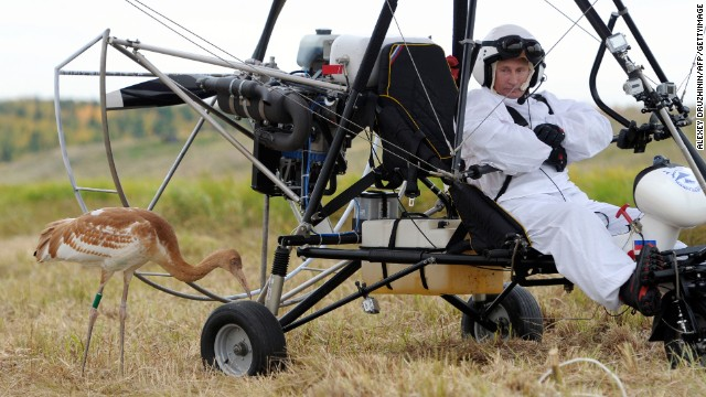 Putin studies a crane during an experiment called Flight of Hope, on September 5, 2012, in which he piloted a hang glider, aiming to lead the birds into flight. It's part of a project to save the rare species of crane.
