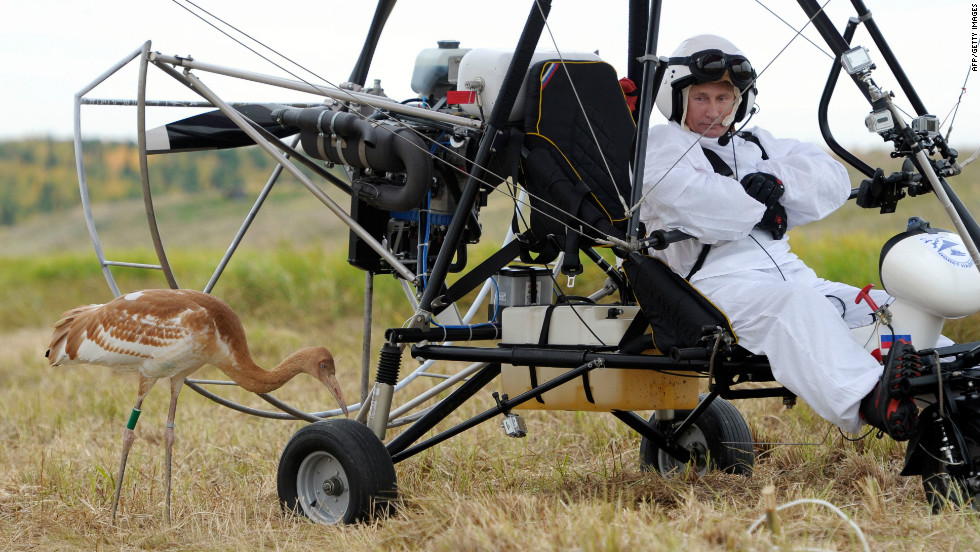 "Russian President Vladimir Putin studies a crane during an experiment called ""Flight of hope"" in which he piloted a hang glider, aiming to lead the birds into flight. It's part of a project to save the rare species of crane."