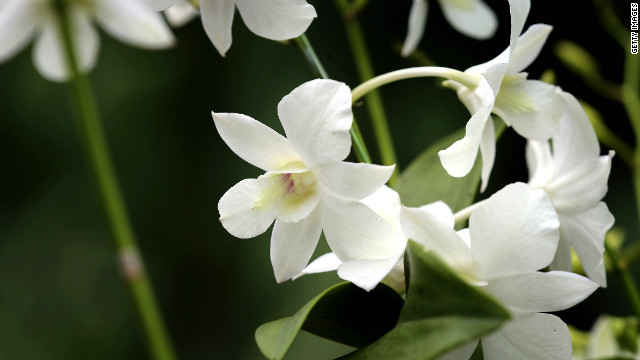 The &quot;Dendrobium Memoria Princess Diana&quot; orchid was named in honor of Diana following her death in a 1997 car accident.