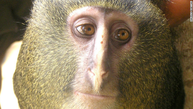 New monkey unveiled to the world