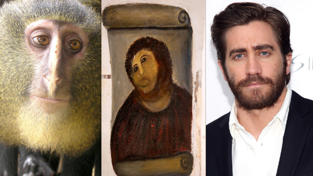 Who&#039;s the monkey? Lesula&#039;s famous lookalikes