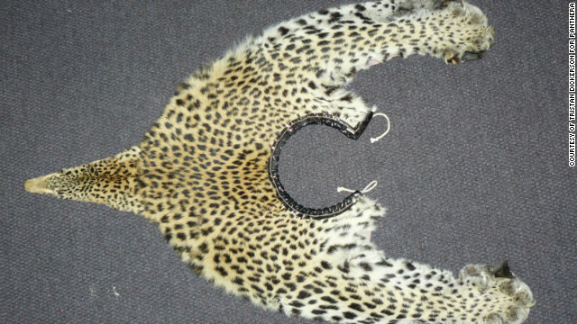 Poachers are increasingly killing leopards to profit from their use in traditional medicine and ceremonial dress.<br/><br/>