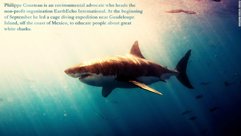 Philippe Cousteau is an environmental advocate who heads the non-profit organization EarthEcho International. At the beginning of September he led a cage diving expedition near Guadalupe island, off the coast of Mexico, to educate people about great white sharks.