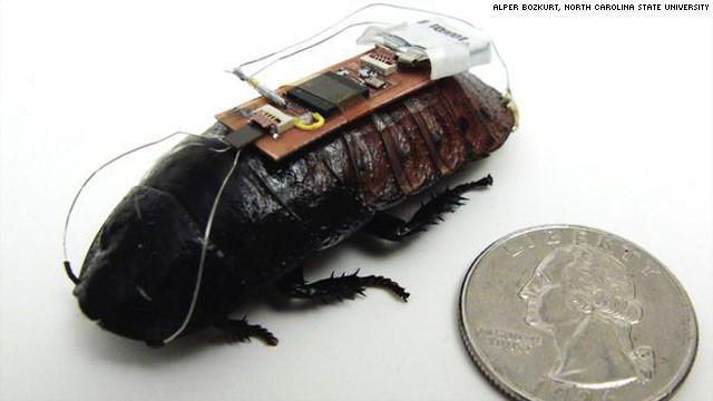Cucarachas biónicas: ¿Nuestros nuevos héroes?