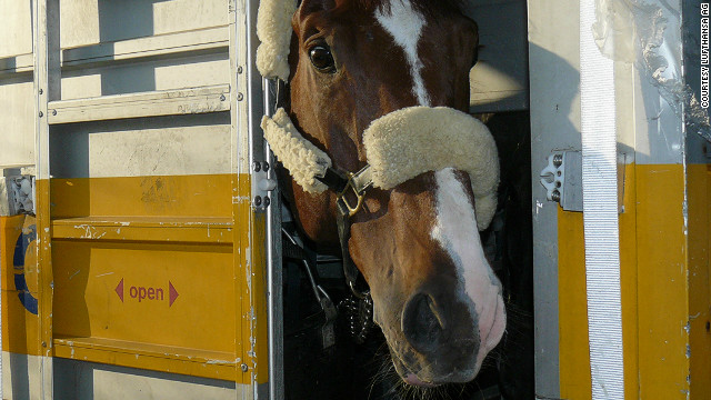 Director of the Animal Lounge Axel Heitman says that 2,000 horses are sent around the world via Frankfurt annually.