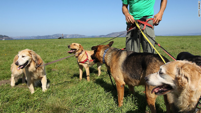 Expert dog walkers and trainers know: use a sturdy leash.