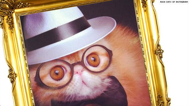 """¡Los """"gatos ricos de Instagram"""" son más ricos que tú!"""