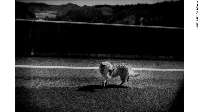 "A photo in the series ""Black Tsunami"" about Japan's 2011 tsunami by James Whitlow Delano, an American photographer living in Japan."