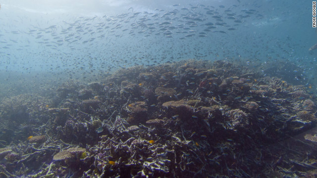 Near Heron Island, Great Barrier Reef