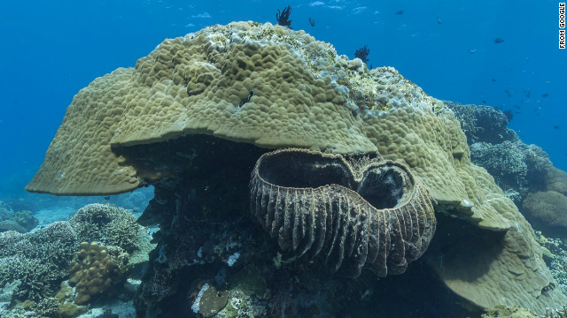Ancient boulder coral in Apo Island, Phillippines
