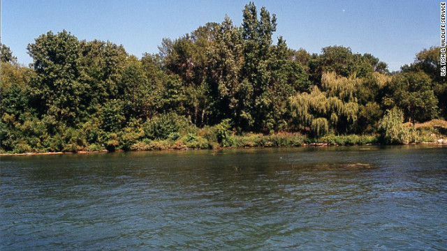 The Calf Island coastline is part of the Detroit River International Wildlife Refuge, a partnership between the United States and Canada and North America's first international wildlife refuge.