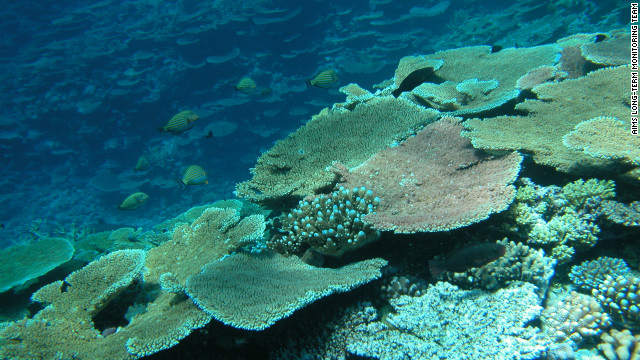 A report out Tuesday revealed that half of the coral coverage on the Great Barrier Reef had disappeared over the past 27 years due to a combination of factors: cyclones, the crown-of-thorns starfish and coral bleaching.