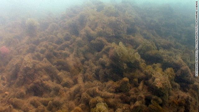 MacDonald reef after cyclone damage. &quot;An area that has been exposed to the eye of the cyclone can look like a rubble zone shortly after it's passed over. It can be really quite devastating,&quot; said Jamie Oliver, a research director with AIMS.