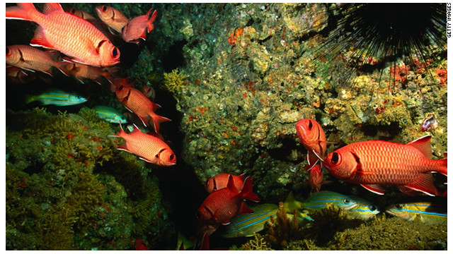 El cambio climático reducirá en un 20% el tamaño de los peces
