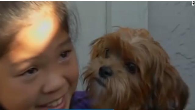 Niña de 10 años ofrece dinero de su alcancía para que le devuelvan a su cachorro robado