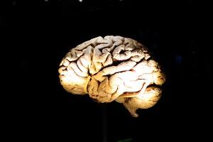 Cómo mantener la salud de tu cerebro