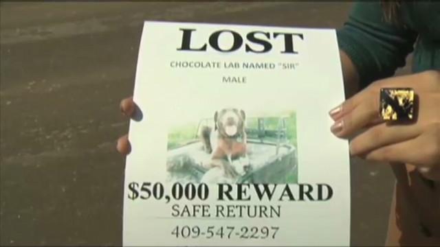 Una pareja en EE.UU. vende la casa para pagar recompensa por su perro
