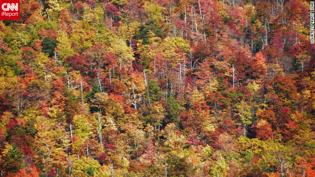 The Cherohala Skyway in Tennessee and North Carolina provides an unparalleled view of autumn color in the <a href='http://ireport.cnn.com/docs/DOC-858396'>Cherokee National Forest</a>.