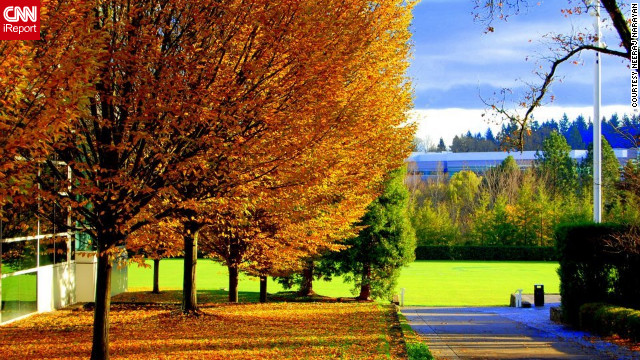 """The leaves make the entire landscape shine,"" said Neeraj Narayan of these golden trees in <a href='http://ireport.cnn.com/docs/DOC-852701'>Beaverton, Oregon</a>."