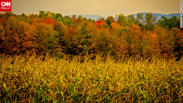 Two icons of autumn -- corn and colorful leaves -- make a beautiful scene in <a href='http://ireport.cnn.com/docs/DOC-856315'>Barre, Vermont</a>.