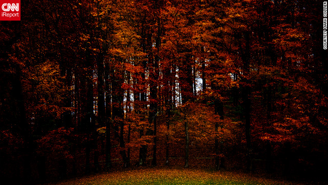 Dark orange and red fall leaves provide a dramatic contrast to the green grass in &lt;a href='http://ireport.cnn.com/docs/DOC-856315'&gt;Walden, Vermont&lt;/a&gt;. 