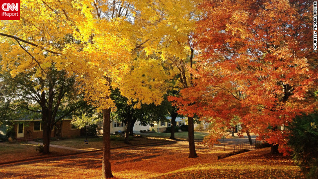 "Gorgeous trees fill a <a href='http://ireport.cnn.com/docs/DOC-852057'>Robbinsdale, Minnesota,</a> neighborhood with colorful leaves. This autumn ""has been one of the most vibrant I've ever seen,"" said Thomas Reiner, who lives here."