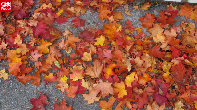 Bright, crunchy leaves pile up on a &lt;a href='http://ireport.cnn.com/docs/DOC-855617'&gt;Stockholm sidewalk&lt;/a&gt;.