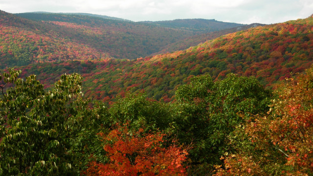 Grayson Highlands State Park spans nearly 5,000 acres.