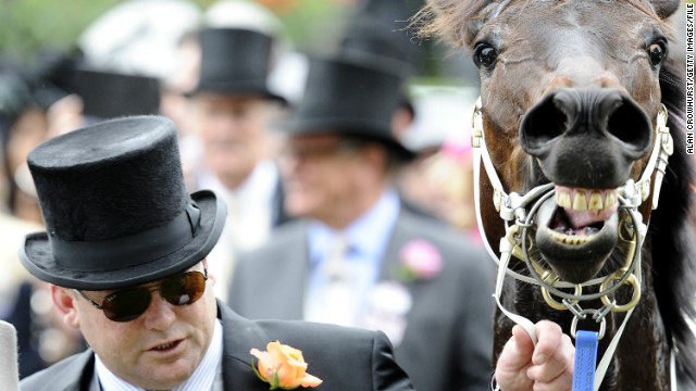 It was later revealed the six-year-old horse (pictured with co-owner Peter Moody) won the dramatic Ascot race with a muscle injury.