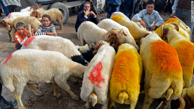 A flock of sheep feeds at an animal market in the southern Turkish city of Kilis on Tuesday.