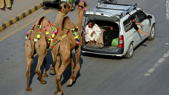 Pakistani Muslims guide camels on the road in Lahore, Pakistan, on Friday, October 26.