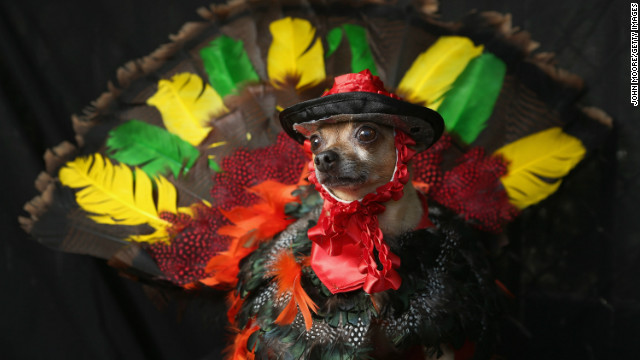 Eli, a Chihuahua, poses as a Thanksgiving turkey at the Tompkins Square Halloween Dog Parade on October 20, 2012 in New York City.