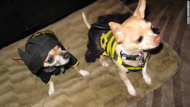 Halloween for pets big business
