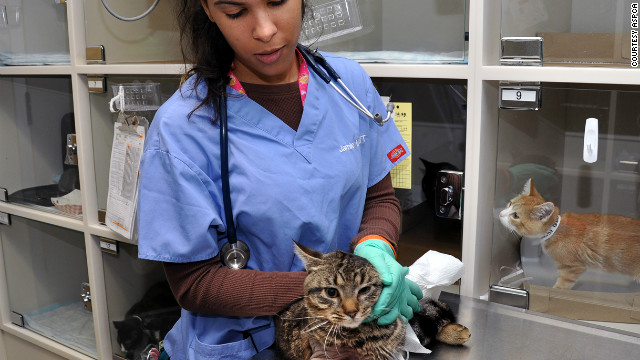 An ASPCA veterinary technician cares for a cat at the ASPCA's Bergh Memorial Animal Hospital in New York.