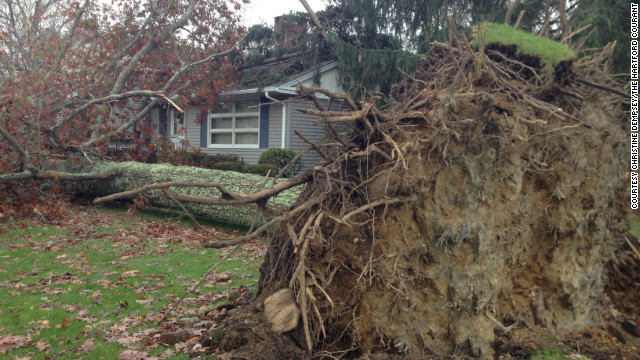 Olga Raymond, 90, was killed by this oak tree that crashed into her front yard on Monday night.