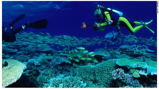 Científicos descubren corales «secretos» bajo el mar de Australia
