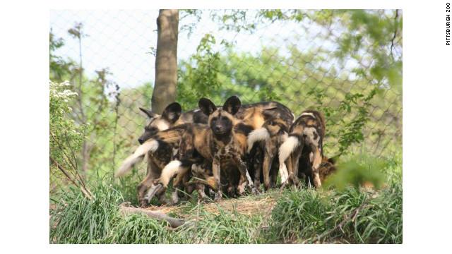 Perros salvajes matan a un niño en un zoológico de Pittsburgh