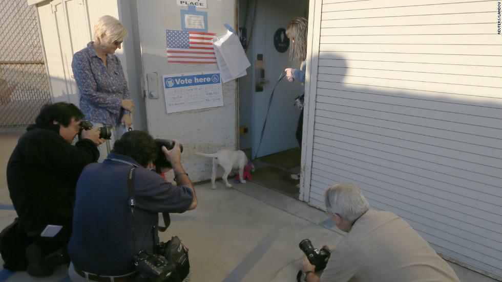 Un perro que elige al presidente y otras rarezas