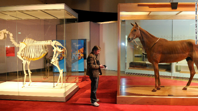 Comparisons have been drawn between Black Caviar and champion Australian race horse Phar Lap, who rose to fame during the Great Depression. Phar Lap's body is now housed in the Melbourne Museum.