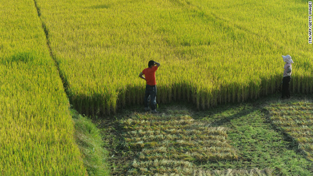 Chinese farmers watch over their field during harvesting in Hefei, east China's Anhui province on October 27, 2011.