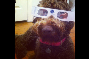 solar eclipse ireport dog