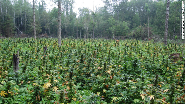 121117050244-marijuana-field-story-top.j