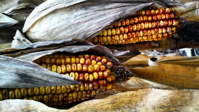 Harvesting the lessons of Drought &#039;12