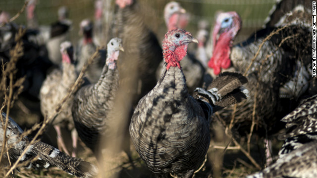 Narragansett heritage turkeys who make up a breeding flock are seen at Springfield Farm last week in Sparks, Maryland.