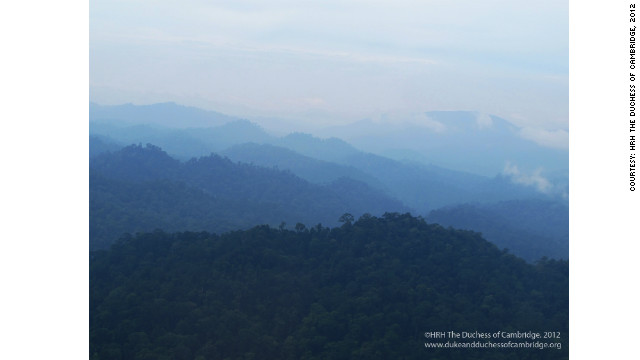The Borneo rainforest is one of the oldest rainforests in the world.
