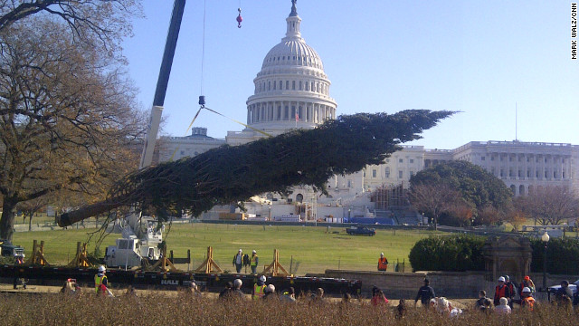 U.S. Capitol gets official Christmas tree