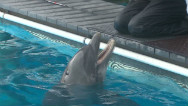 Who maimed and murdered dolphins?