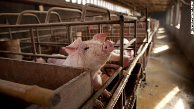 Report finds 69% of pork contaminated with bacteria