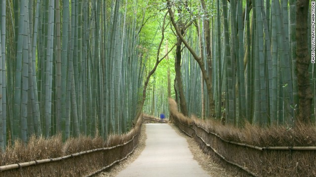 Give someone the gift of lucky bamboo and spend the resulting good fortune on seeing real bamboo forests in Japan.