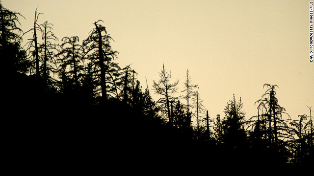 """[The study] suggests that if temperature projections are at all correct that we are now entering a period that could be called 'the end of old trees', as current tree individuals increasingly die from rapidly growing drought/heat stress, perhaps in wholesale fashion in coming years/decades,""Craig Allen from the U.S. Geological Survey says."